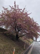 道端の花?