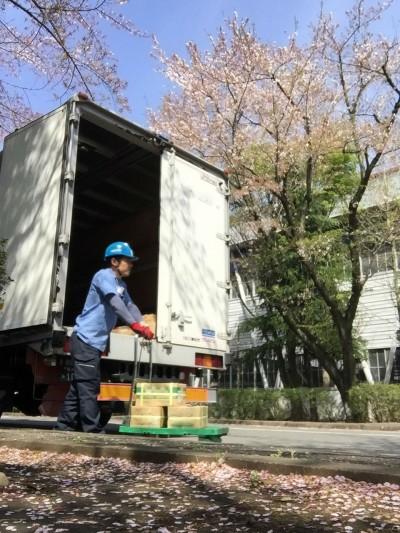 配送先で訪れた、4t車と桜のコラボレーション!!!