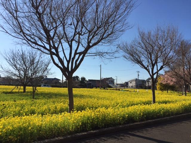 横浜市都筑区の川和町駅の配送、巡回をしている際に出会った風景